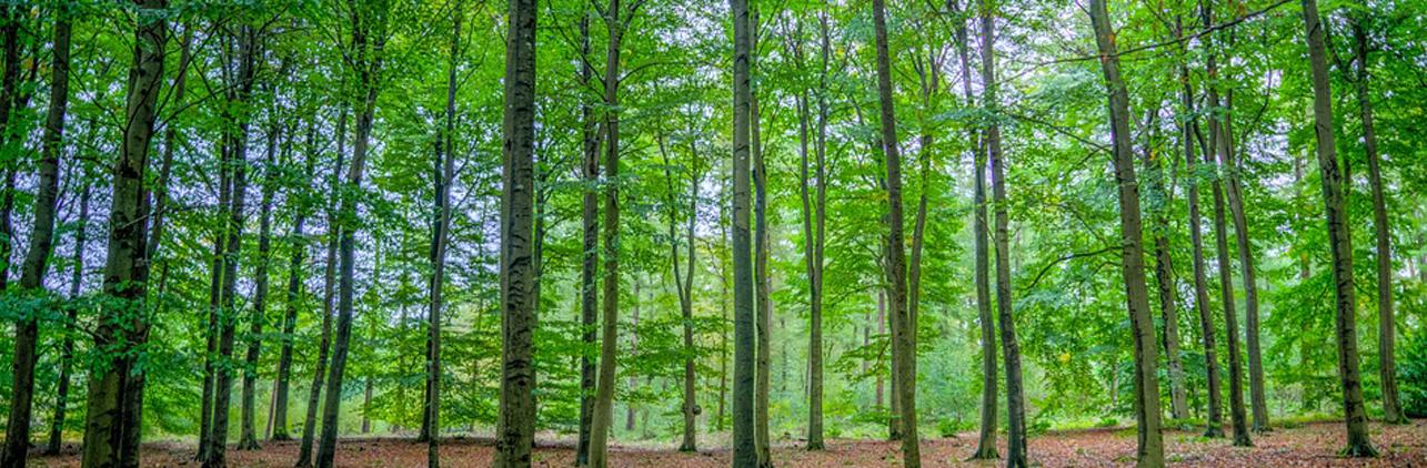 Pellet di legna certificato